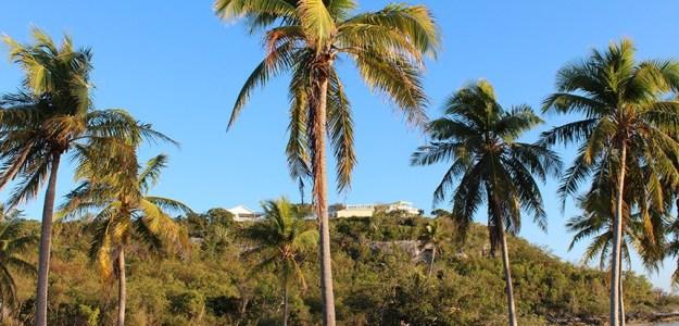 Trees Bahamas